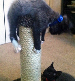 Cat Tree Scratchers
