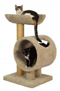 Double Tier Cat Furniture Molly And Friends